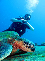 gallery-maui-scuba-photos-turtles-i-love-turtles-ba