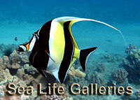 SEA LIFE GALLERIES