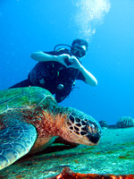 I Love Turtles Scuba